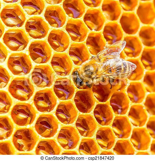 Las abejas trabajan en panal - csp21847420