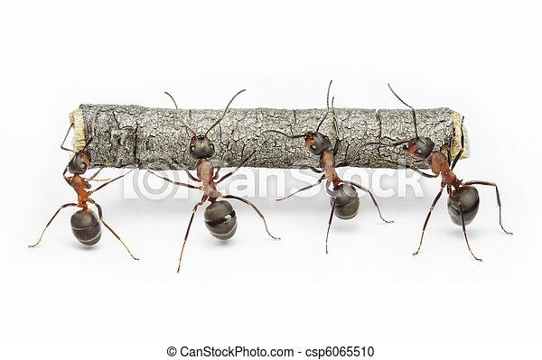 Equipo de hormigas trabajan con troncos, trabajo en equipo - csp6065510