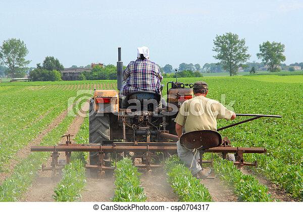 trabalhando, agricultores - csp0704317
