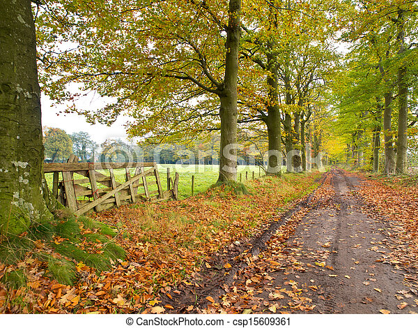 Track with Gate and Forest lane in Fall - csp15609361