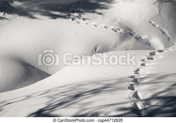 Tracks in the snow - csp44712628