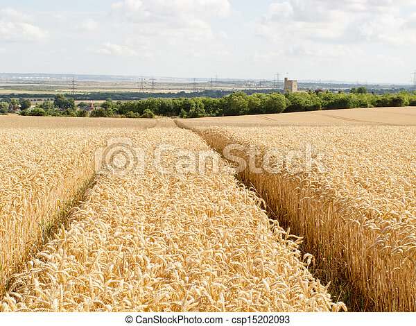 Tracks through the Wheat - csp15202093
