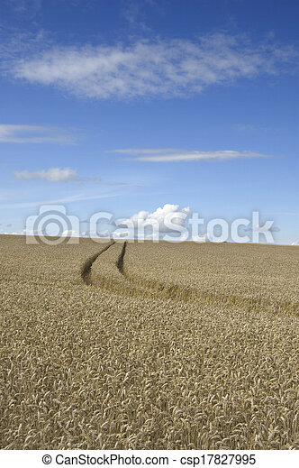 Tracks through the wheat - csp17827995