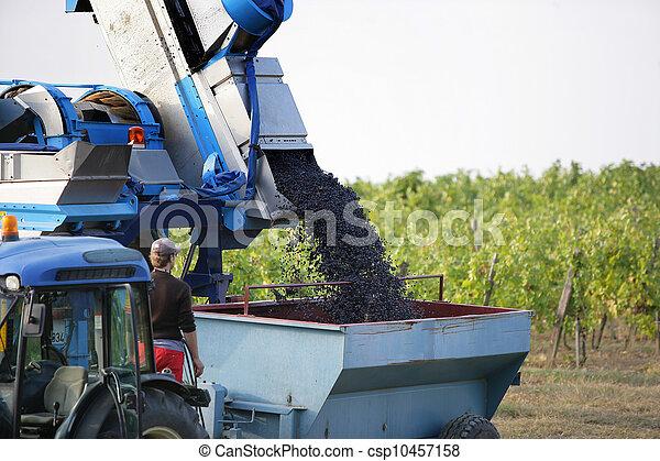 Tractor cosechando uvas - csp10457158