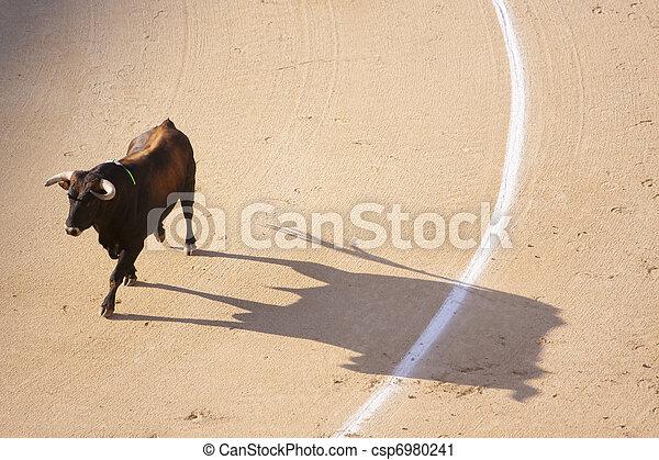 Traditional corrida - bullfighting in spain - csp6980241