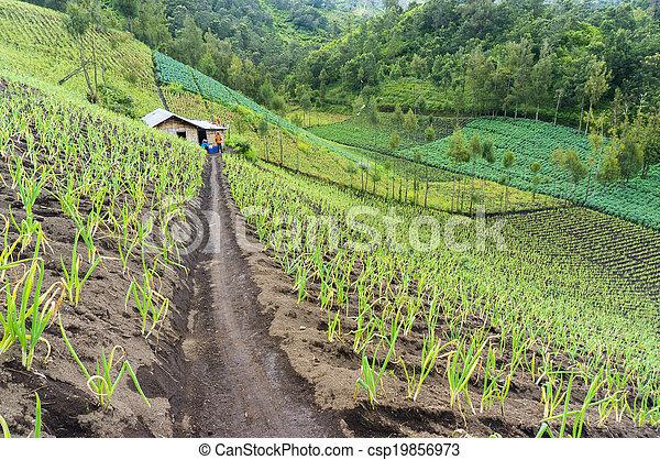 traditional farmer - csp19856973
