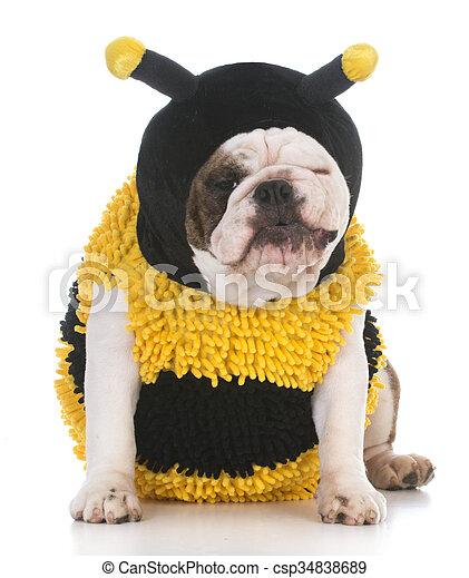 tragen hund kost m biene m gen bulldogge angekleidet bilder fotografien und foto. Black Bedroom Furniture Sets. Home Design Ideas