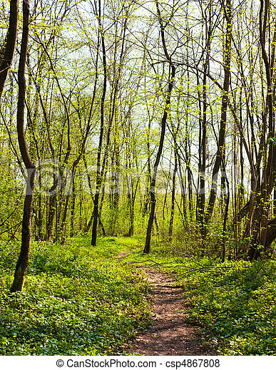trail in the spring forest - csp4867808
