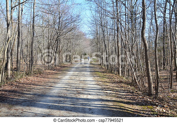 trail or path in forest or woods with trees - csp77945521