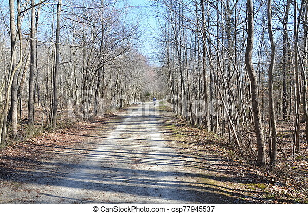 trail or path in forest or woods with trees - csp77945537