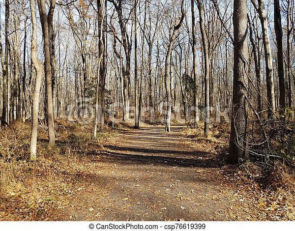 trail or path in woods with trees and fallen leaves - csp76619399