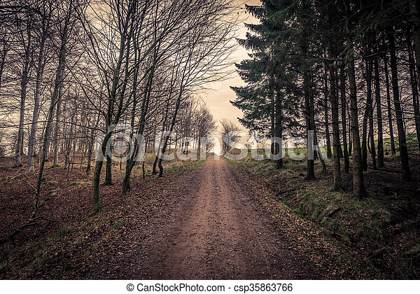 Trail surrounded by trees in a forest - csp35863766