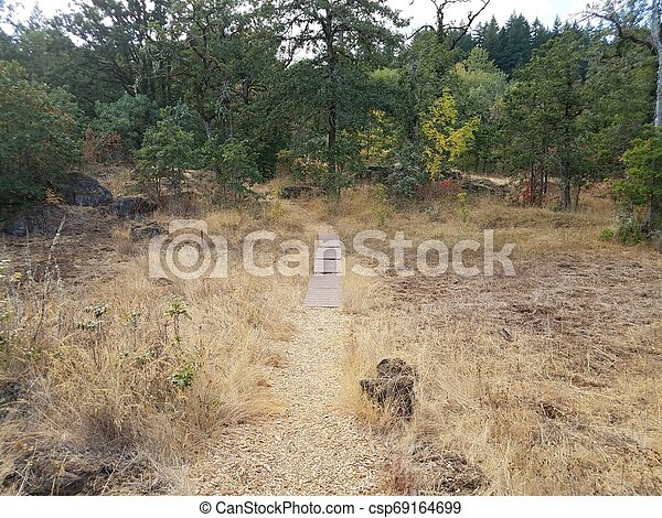 trail with brown grasses and trees outdoor - csp69164699