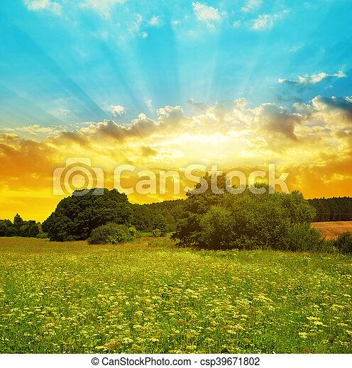 tramonto, prato - csp39671802