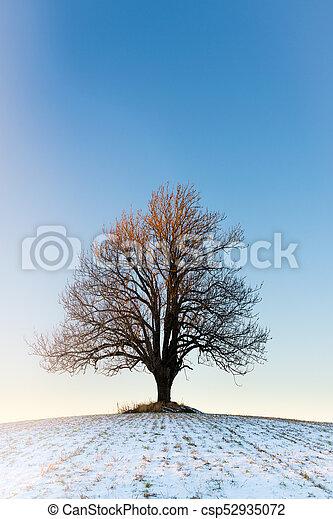 tramonto, solitario, inverno albero - csp52935072