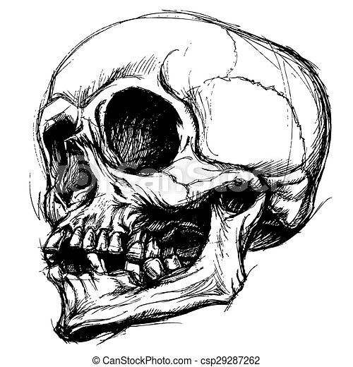 Connu Clipart vecteur de travail, ligne, vecteur, dessin, crâne - usage  DP48