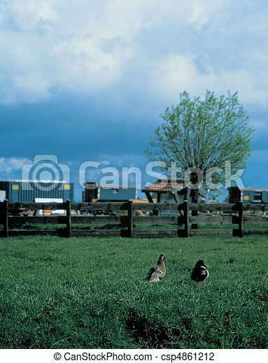 Travel to Netherlands - csp4861212