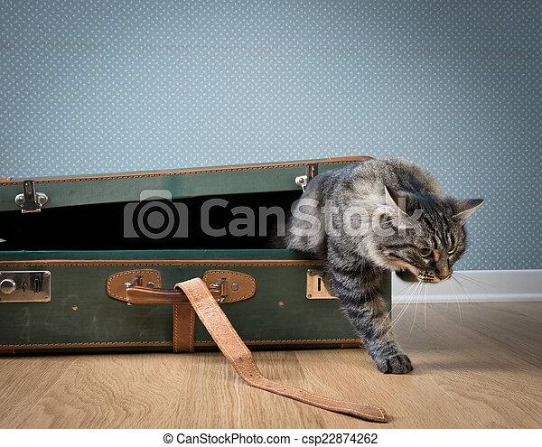 Traveler cat - csp22874262