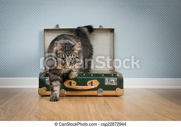 Traveler cat - csp22872944