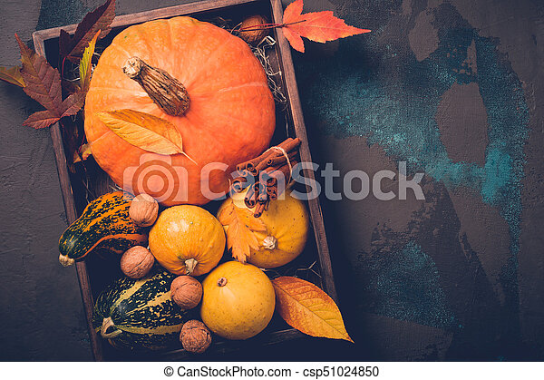 Tray with variety of decorative pumpkins. Autumn, Thanksgiving or Halloween concept, copy space - csp51024850