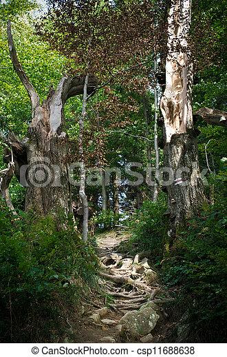 Camino en el bosque - csp11688638