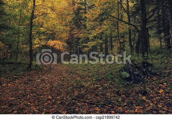 Camino del bosque - csp21899742