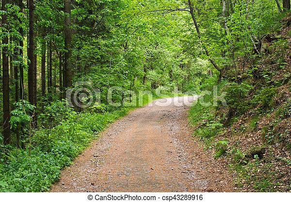 Camino en el bosque - csp43289916
