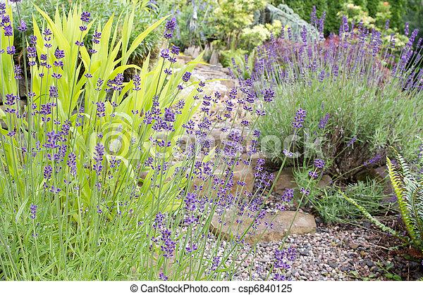 Patrón de jardín con flores de lavanda inglesa - csp6840125