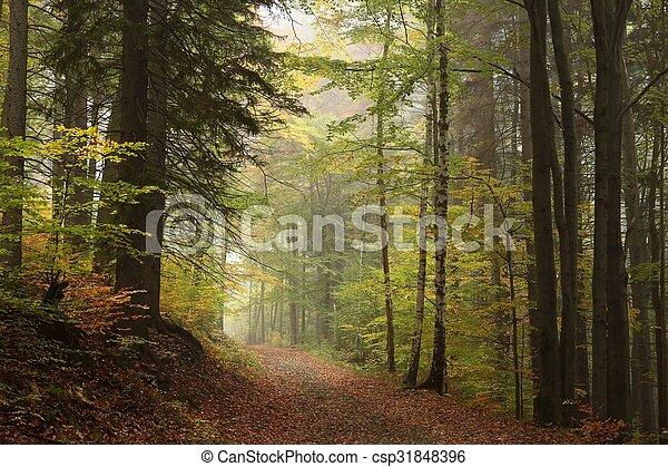 Camino a través del bosque otoñal - csp31848396