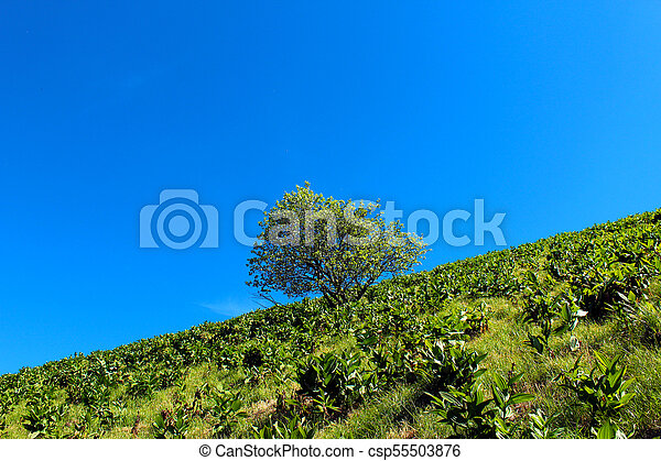 Tree against blue sky on a mountain - csp55503876