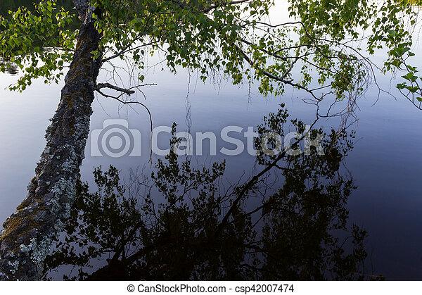 Tree and lake - csp42007474