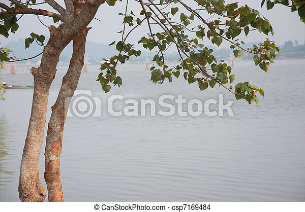 tree and lake - csp7169484