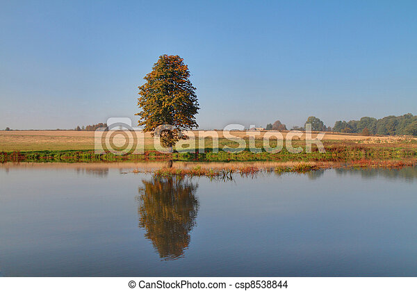 Tree and lake - csp8538844