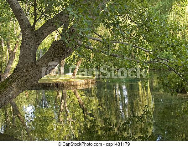 tree and lake - csp1431179