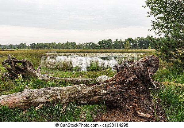 Tree and lake swamp - csp38114298
