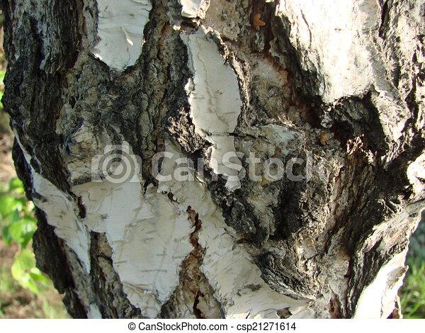 Tree bark. - csp21271614
