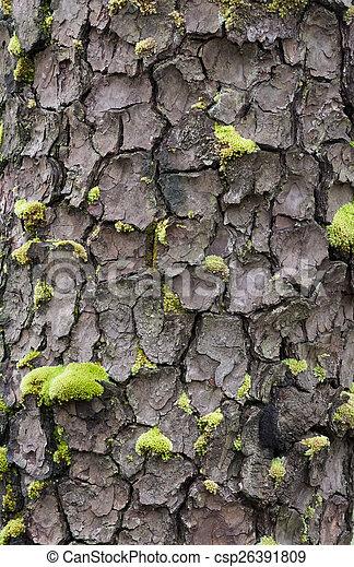 Tree bark - csp26391809