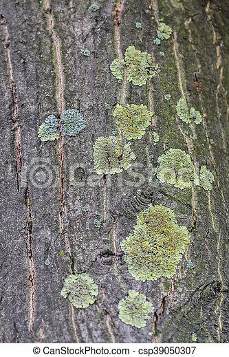 Close up of tree bark structure with the moss in autumn