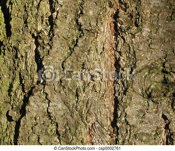 Tree Bark Texture - csp0002761