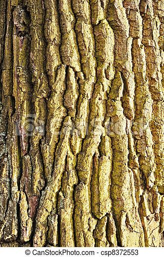 Tree bark texture - csp8372553