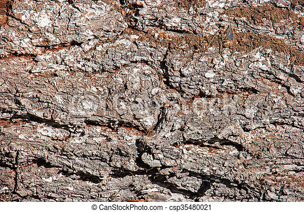 Tree bark texture wallpaper macro - csp35480021
