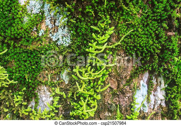 tree bark with moss - csp21507984