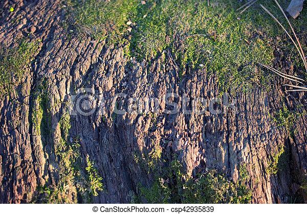 tree bark with moss - csp42935839