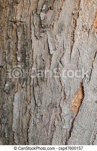 Tree bark wood texture background - csp47600157