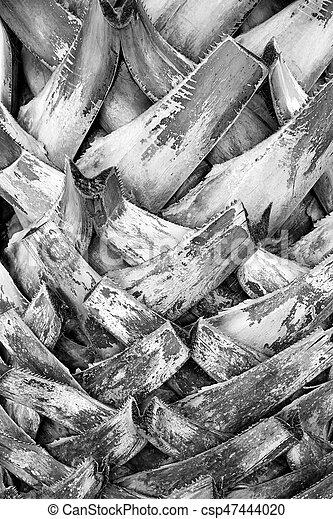 Tree bark wood texture background - csp47444020