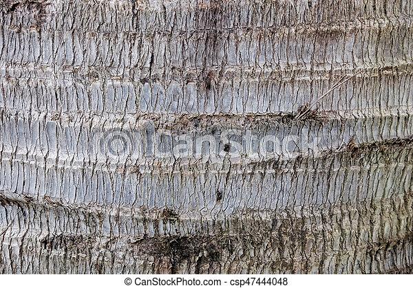 Tree bark wood texture background - csp47444048
