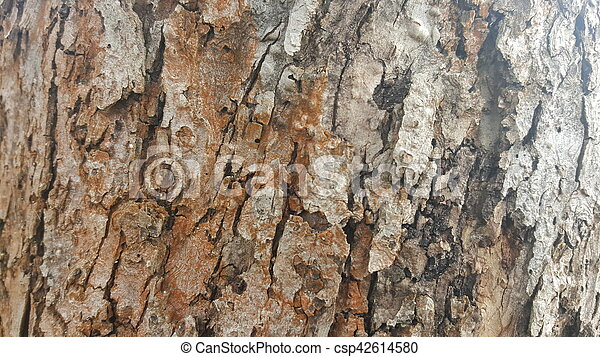 Tree bark / wood texture - csp42614580