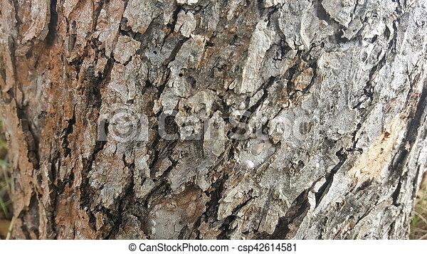 Tree bark / wood texture - csp42614581