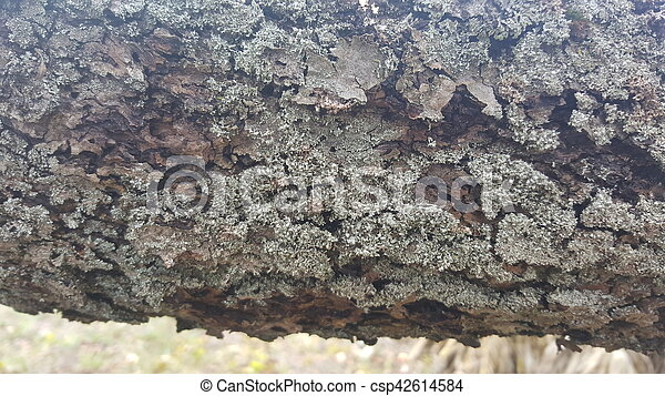 Tree bark / wood texture - csp42614584
