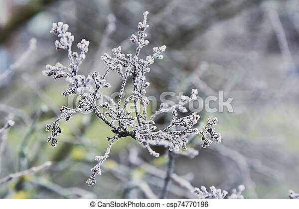 tree branch in the winter covered with hoarfrost - csp74770196
